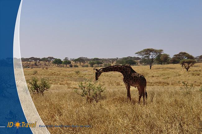 Expeditie-Safari-07